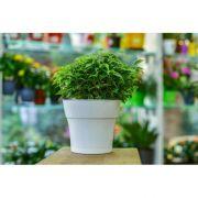 Горшок цв. Тоскана 1,45л D15 с поддоном (белый) 5PL0398 в интернет магазине Импульс, фото
